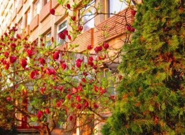Anchetă la Spitalul Județean din Satu Mare, după decesul unei femei de 82 de ani