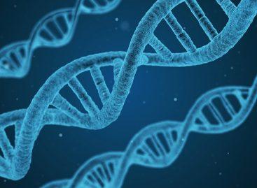 Un nou pas spre modificarea genomului realizat prin manipularea wireless a unei gene esențiale pentru dezvoltarea umană