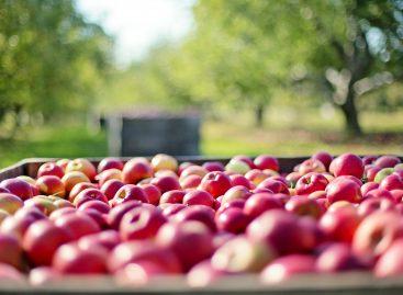Un compus chimic care se găsește în mere încetinește îmbătrânirea, arată un studiu realizat în SUA