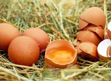 Aportul moderat de colesterol alimentar sau consumul unui ou zilnic nu crește riscul de AVC, arată un studiu realizat în Finlanda