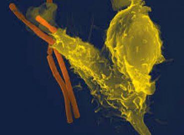 J & J și Arrowhead intră într-o alianță de 3,7 miliarde dolari ca să dezvolte o nouă terpaie pentru hepatita B