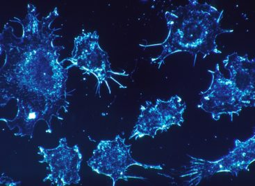 O nouă strategie chimioterapeutică dezvoltată în Coreea ucide mai eficient celulele canceroase