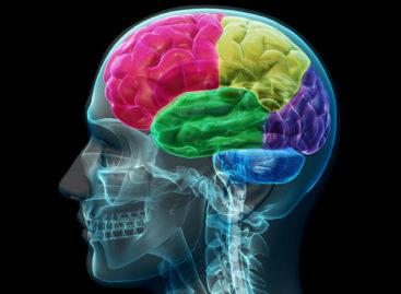 Două noi tipuri de neuroni implicaţi în mişcare, descoperite în cel mai amplu studiu al creierului