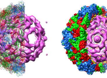 Un nou virus ar putea ajuta la distrugerea cancerului