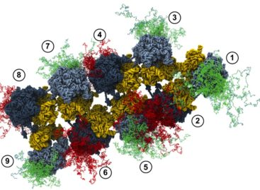 O nouă metodă pentru eliminarea proteinelor toxice care distrug celulele musculare şi cerebrale dezvoltată de cercetătorii americani
