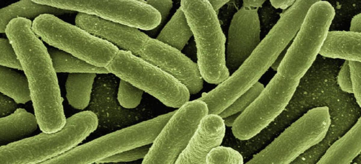 O metodă de a face bacteriile unicelulare să se comporte ca celulele stem dezvoltată de cercetătorii americani