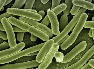 Infecţia cu E.Coli