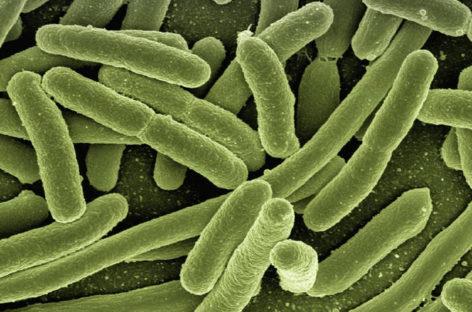 Un vaccin pentru copii împotriva E. coli enterotoxigenică, testat cu succes în Suedia