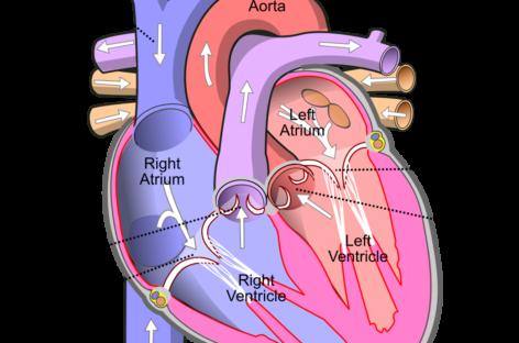 Folosirea terapiei cu aspirină și ticagrelor scade incidența evenimentelor cardiovasculare la pacienții cu diabet, dar dublează riscul de sângerare majoră