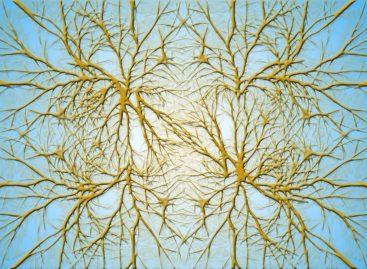Exosomii pot restaura sănătatea celulelor din creier afectate de boli de neurodezvoltare, susțin cercetătorii americani