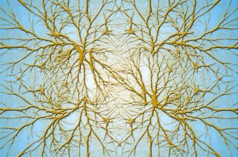 Un senzor care poate detecta nivelul dopaminei și tulburările cerebrale în doar câteva secunde, dezvoltat în SUA