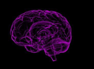 Un nou minimicroscop pentru studiul bolilor cerebrale dezvoltat de cercetătorii americani