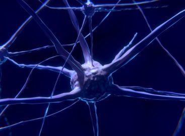 Noi piste pentru cercetarea dezvoltării creierului uman, descoperite prin analiza comparativă cu primatele