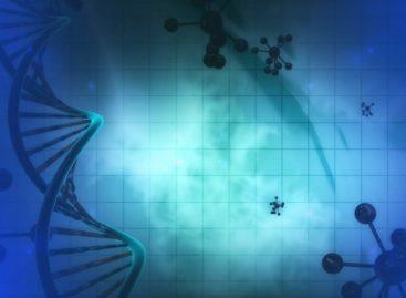 O nouă terapie genetică pentru redarea auzului a obținut rezultate promițătoare în testele realizate în laborator