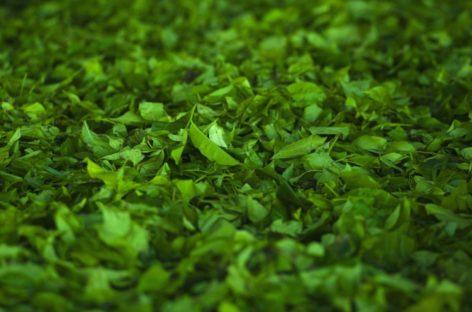 Cercetătorii din SUA au dezvoltat un nou polimercareconține un antioxidantinteligentceseeliberează în organism atunci când este nevoie