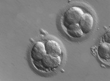 O metodă de cultivare a țesuturilor embrionare pe un cip, descoperită de cercetători elvețieni