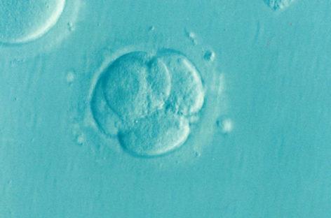 Rata cumulată de succes la fertilizare in vitro: Rata de reușită la o procedură FIV cu ovocite donate este de 68% la femeile care au făcut una singură, iar la cele care au trecut prin două astfel de proceduri rata cumulată de reușită crește la 89%