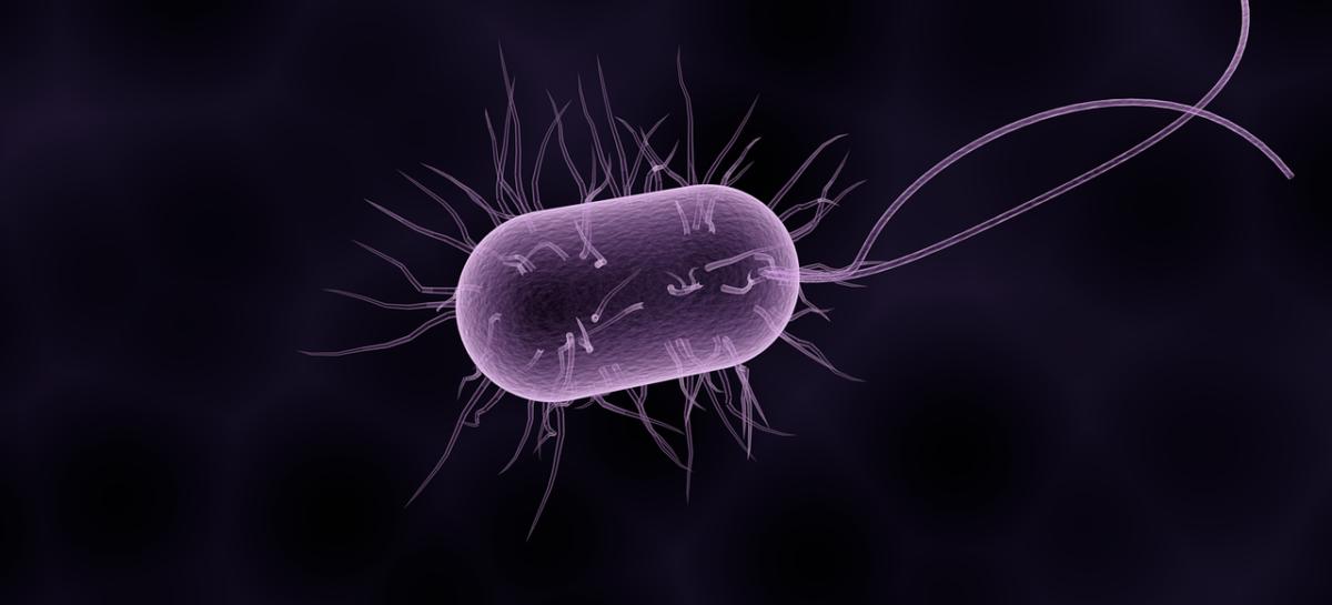 """Abordare promițătoare în tratamentul împotriva """"superbacteriei"""" stafilococul auriu"""
