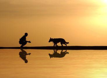 Studiu: Persoanele care au câini au un risc mai mic de a dezvolta probleme cardiovasculare