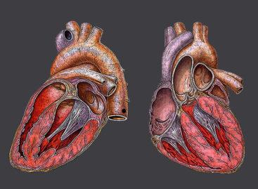 Cardiologi români: Pandemia Covid-19 este prioritară, dar urgențele cardiovasculare nu trebuie subestimate