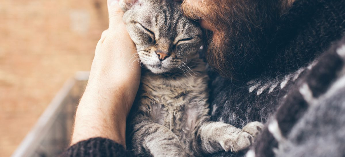 Primul caz de transmitere a coronavirusului de la om la pisică, confirmat în Belgia