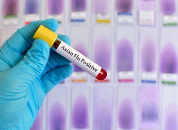 Primul caz de transmitere la om a gripei aviare H10N3 raportat pe plan mondial