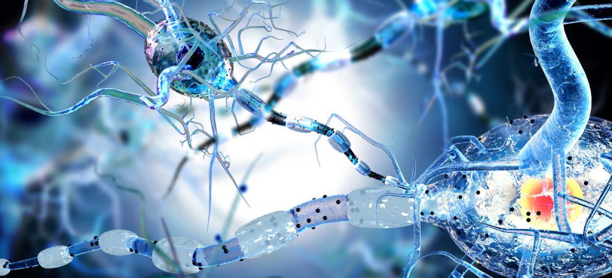 Moleculă promițătoare pentru dezvoltarea unui tratament eficace al sclerozei multiple